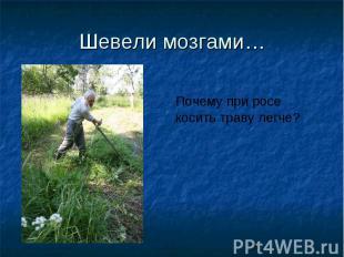 Шевели мозгами…Почему при росе косить траву легче?