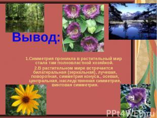 Вывод: Симметрия проникла в растительный мир стала там полновластной хозяйкой. 2