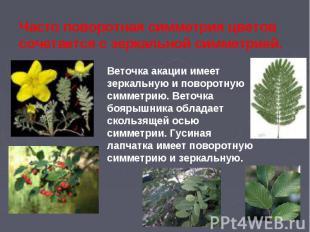Часто поворотная симметрия цветов сочетается с зеркальной симметрией.Веточка ака