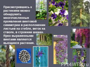 Присмотревшись к растениям можно обнаружить многочисленные проявления винтовой с