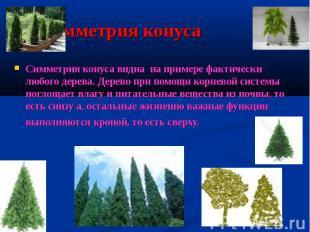 Симметрия конуса Симметрия конуса видна на примере фактически любого дерева. Дер