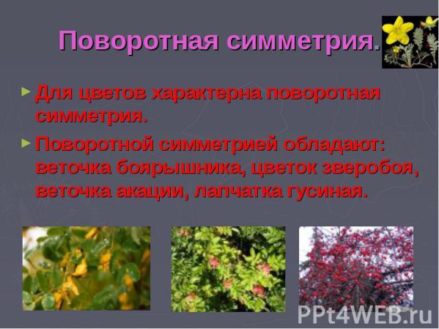 Поворотная симметрия.Для цветов характерна поворотная симметрия.Поворотной симметрией обладают: веточка боярышника, цветок зверобоя, веточка акации, лапчатка гусиная.