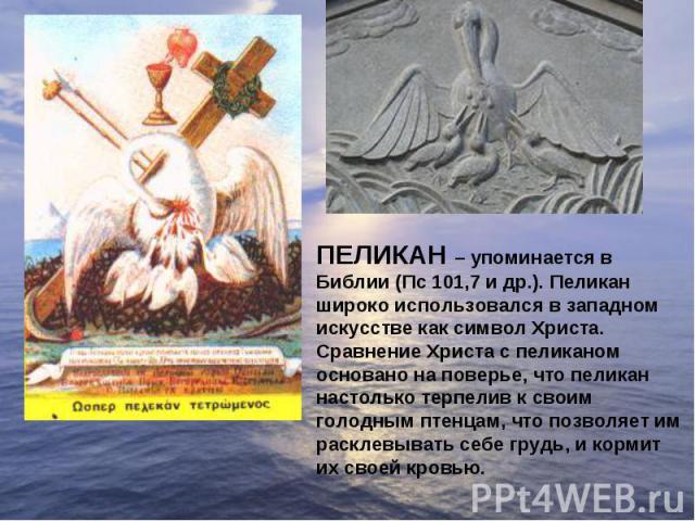 ПЕЛИКАН – упоминается в Библии (Пс 101,7 и др.). Пеликан широко использовался в западном искусстве как символ Христа. Сравнение Христа с пеликаном основано на поверье, что пеликан настолько терпелив к своим голодным птенцам, что позволяет им расклев…