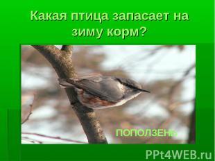 Какая птица запасает на зиму корм?