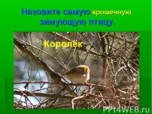 Назовите самую крошечную зимующую птицу.Королёк