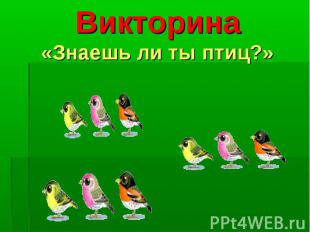 Викторина«Знаешь ли ты птиц?»