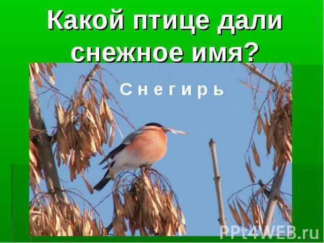 Какой птице дали снежное имя?С н е г и р ь