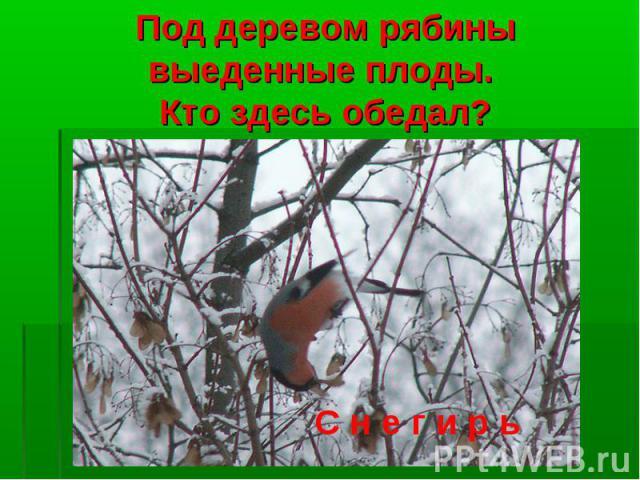 Под деревом рябины выеденные плоды. Кто здесь обедал?