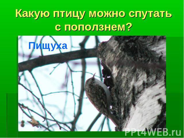 Какую птицу можно спутать с поползнем?Пищуха