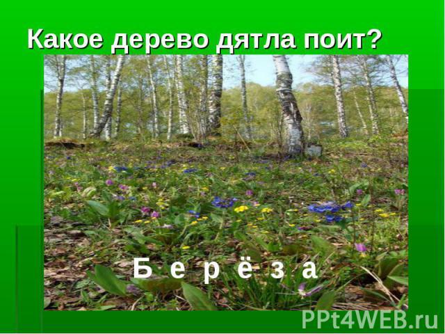 Какое дерево дятла поит?