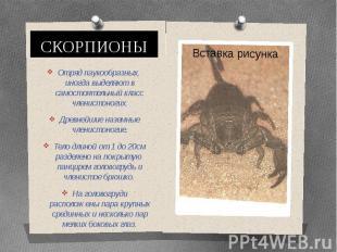 СКОРПИОНЫОтряд паукообразных, иногда выделяют в самостоятельный класс членистоно