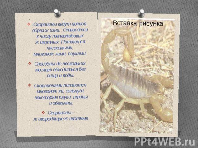 Скорпионы ведут ночной образ жизни. Относятся к числу теплолюбивых животных. Питаются насекомыми, многоножками, пауками.Способны до нескольких месяцев обходиться без пищи и воды.Скорпионами питаются многоножки, сольпуги, некоторые пауки, птицы и обе…