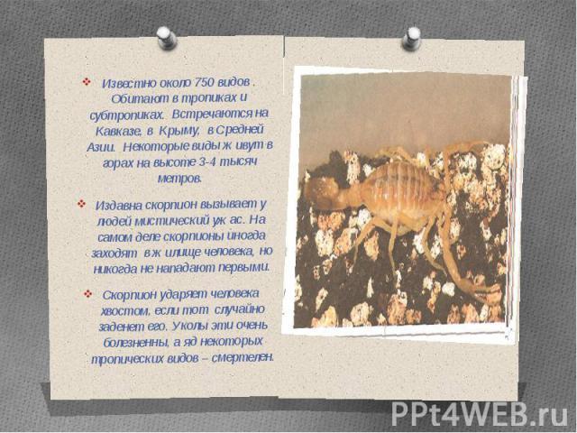 Известно около 750 видов . Обитают в тропиках и субтропиках. Встречаются на Кавказе, в Крыму, в Средней Азии. Некоторые виды живут в горах на высоте 3-4 тысяч метров.Издавна скорпион вызывает у людей мистический ужас. На самом деле скорпионы иногда …
