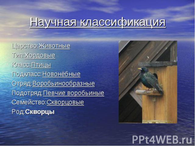 Научная классификация Царство: Животные Тип: Хордовые Класс: Птицы Подкласс: Новонёбные Отряд: Воробьинообразные Подотряд: Певчие воробьиные Семейство: Скворцовые Род: Скворцы