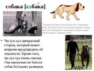 собака [сабака] Издавна мастино использовали как сторожевую собаку. Мастино явля