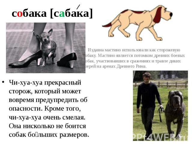 собака [сабака] Издавна мастино использовали как сторожевую собаку. Мастино является потомком древних боевых собак, участвовавших в сражениях и травле диких зверей на аренах Древнего Рима.Чи-хуа-хуа прекрасный сторож, который может вовремя предупред…