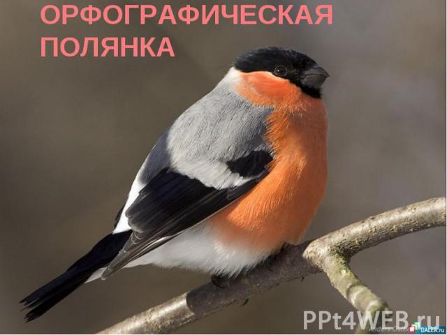ОРФОГРАФИЧЕСКАЯ ПОЛЯНКА