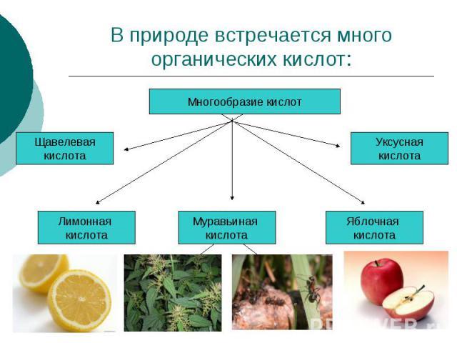 В природе встречается много органических кислот: