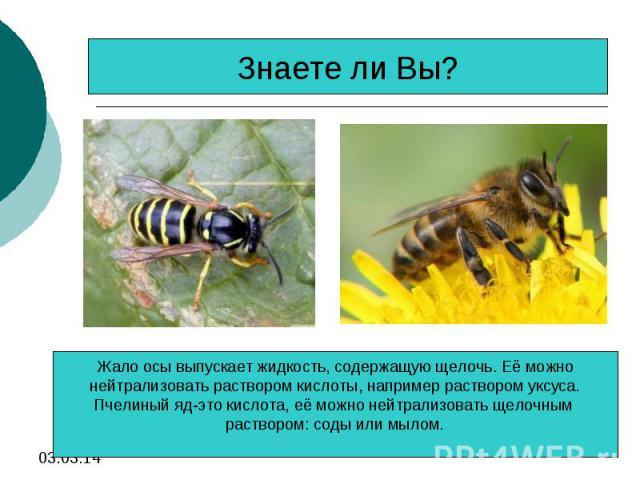 Знаете ли Вы?Жало осы выпускает жидкость, содержащую щелочь. Её можнонейтрализовать раствором кислоты, например раствором уксуса.Пчелиный яд-это кислота, её можно нейтрализовать щелочным раствором: соды или мылом.