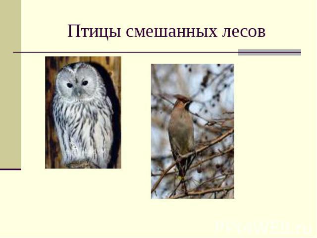 Птицы смешанных лесов