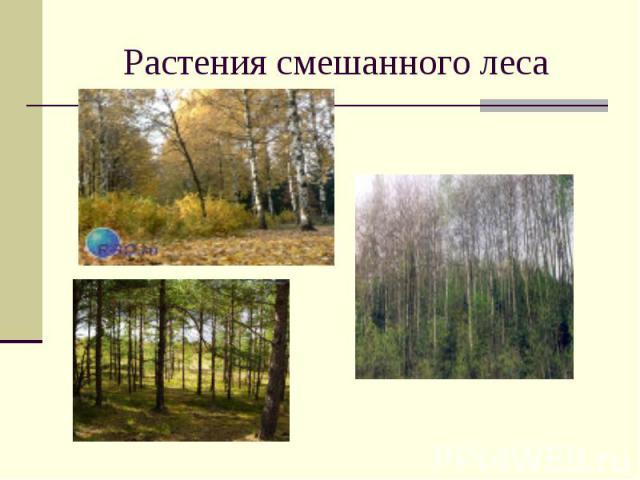 Растения смешанного леса
