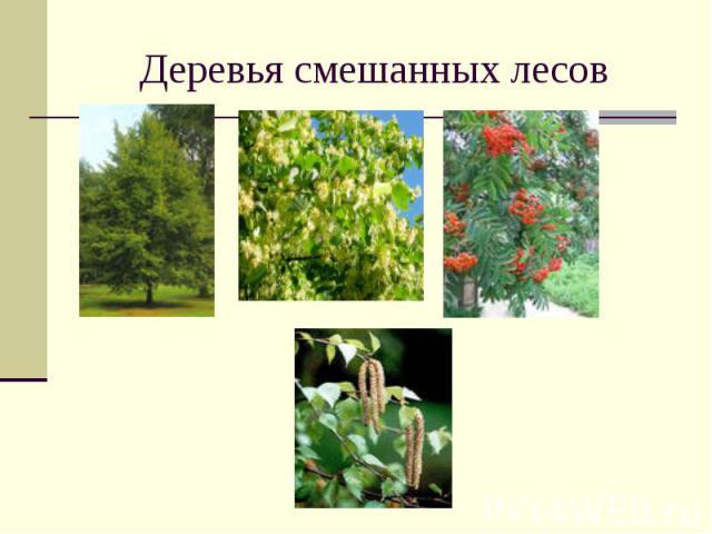 Деревья смешанных лесов
