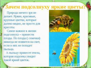 Зачем подсолнуху яркие цветы? Природа ничего зря не делает. Яркие, красивые, кру