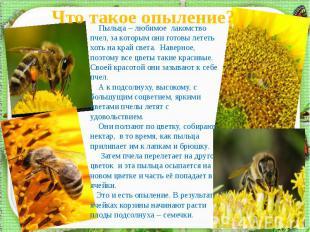 Что такое опыление? Пыльца – любимое лакомство пчел, за которым они готовы летет