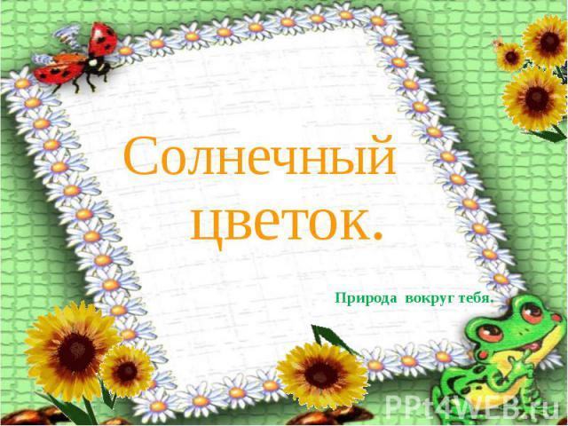 Солнечный цветок Природа вокруг тебя.
