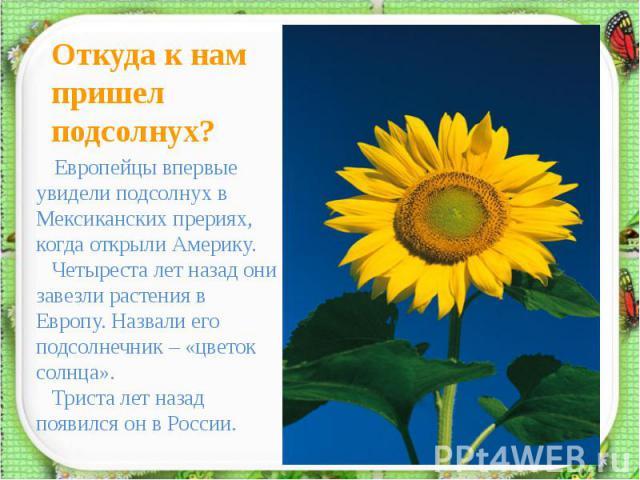 Откуда к нам пришел подсолнух? Европейцы впервые увидели подсолнух в Мексиканских прериях, когда открыли Америку. Четыреста лет назад они завезли растения в Европу. Назвали его подсолнечник – «цветок солнца». Триста лет назад появился он в России.