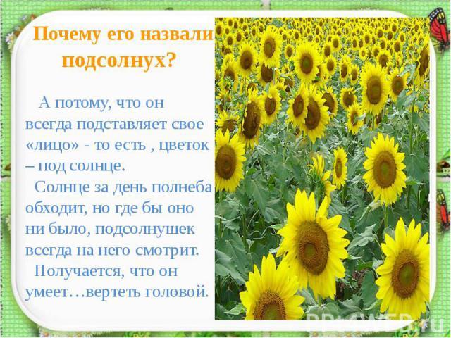 Почему его назвали подсолнух? А потому, что он всегда подставляет свое «лицо» - то есть , цветок – под солнце. Солнце за день полнеба обходит, но где бы оно ни было, подсолнушек всегда на него смотрит. Получается, что он умеет…вертеть головой.