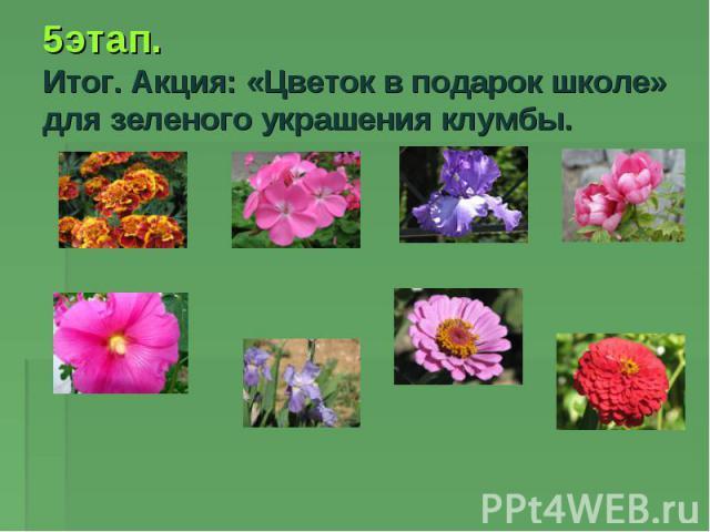 5этап. Итог. Акция: «Цветок в подарок школе» для зеленого украшения клумбы.