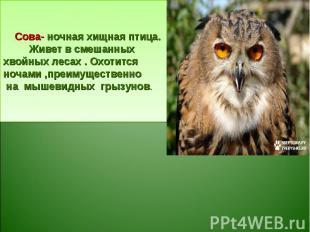 Сова- ночная хищная птица. Живет в смешанных хвойных лесах . Охотится ночами ,пр