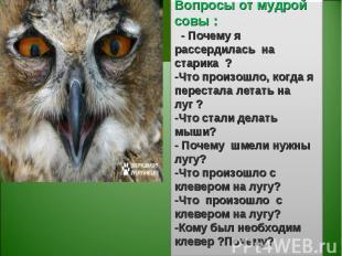 Вопросы от мудрой совы : - Почему я рассердилась на старика ?-Что произошло, ког