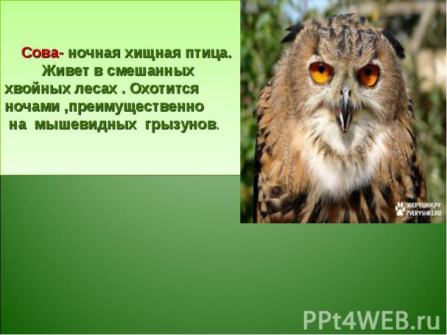 Сова- ночная хищная птица. Живет в смешанных хвойных лесах . Охотится ночами ,преимущественно на мышевидных грызунов.