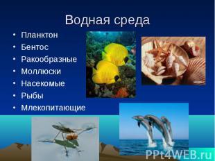 Водная среда Планктон Бентос Ракообразные Моллюски Насекомые Рыбы Млекопитающие
