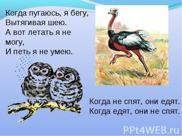 Когда пугаюсь, я бегу,Вытягивая шею.А вот летать я не могу,И петь я не умею.Когда не спят, они едят.Когда едят, они не спят.