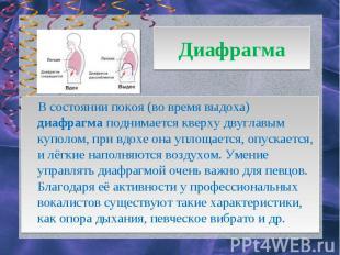 Диафрагма В состоянии покоя (во время выдоха) диафрагма поднимается кверху двугл