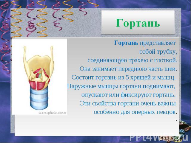Гортань Гортаньпредставляет собой трубку, соединяющую трахею с глоткой. Она занимает переднюю часть шеи. Состоит гортань из 5 хрящей и мышц. Наружные мышцы гортани поднимают, опускают или фиксируют гортань. Эти свойства гортани очень важны особенно…