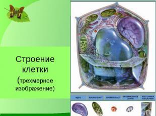 Строение клетки(трехмерноеизображение)