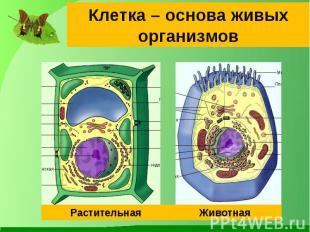 Клетка – основа живых организмов