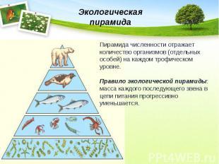Экологическая пирамидаПирамида численности отражает количество организмов (отдел