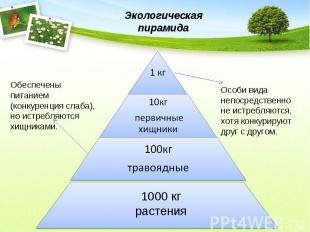 Экологическая пирамидаОбеспечены питанием (конкуренция слаба), но истребляются х