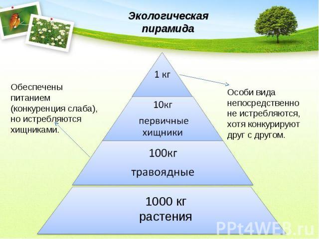 сформулируйте правила экологической пирамиды никого удивить бронированием