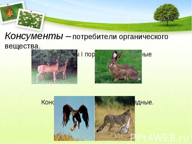 Консументы – потребители органического вещества.Консументы I порядка – травоядныеКонсументы II порядка – плотоядные.