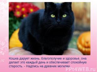 Кошка дарует жизнь, благополучие и здоровье, она делает это каждый день и обеспе