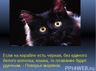 Если на корабле есть черная, без единого белого волоска, кошка, то плавание буде
