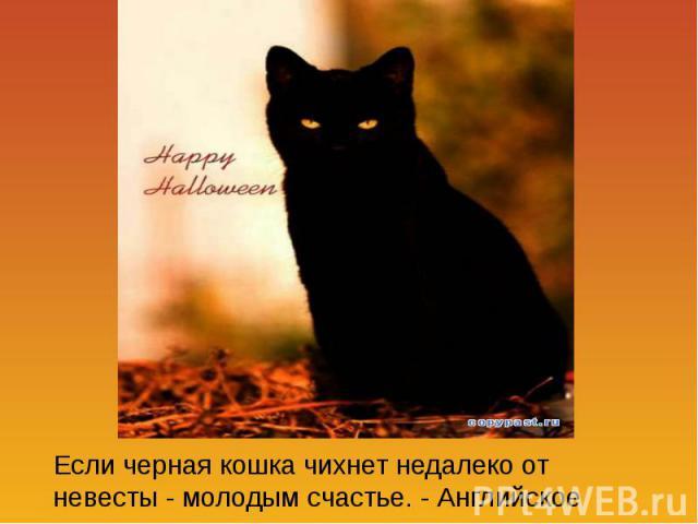 Если черная кошка чихнет недалеко от невесты - молодым счастье. - Английское поверье.