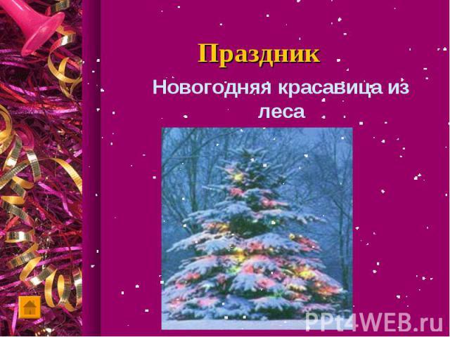 Новогодняя красавица из леса