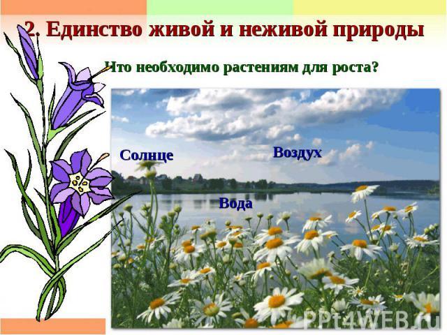 2. Единство живой и неживой природы Что необходимо растениям для роста?